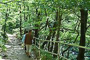 Wanderweg im Bodetal, Thale, Harz, Sachsen-Anhalt, Deutschland | walking track in Bode Valley, Thale, Harz, Saxony-Anhalt, Germany