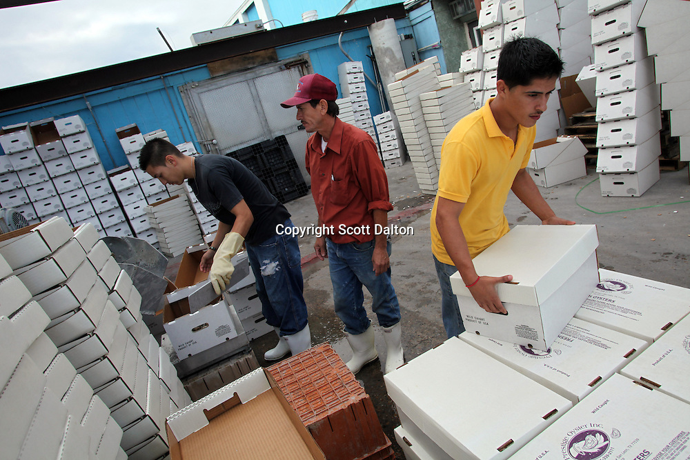 Workers box oysters at a facility of Prestige Oyster in San Leon, TX, on Thursday, November 19, 2009. The oyster industry suffered a sever blow after Hurricane Ike and many say they still have not recovered, catches are much lower than in previous years. (Photo/Scott Dalton)