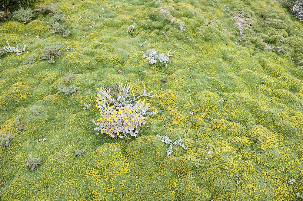 Seno Otway Moss, Chile