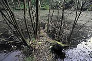 Nederland, Ubbergen, 27-9-2011De Staatssecretaris van Lanbouw en Milieu wil 63 van de 190 beschermde natuurgebieden in Nederland ontdoen van hun beschermde status. Het beschermd natuurgebied het Bronnenbos, achter voormalig klooster de Refter, zou hierdoor getroffen worden.Water loopt hier uit kleine bronnen langs de heuvel naar beneden en heeft een unieke biotoop gevormd waar onlangs zelfs sporen van de bever zijn gevonden.De gemeente Beek-Ubbergen is in 2007 uitgeroepen tot de groenste van Nederland. Hij ligt voor een deel op een heuvelrug, stuwwal met bossen en waterlopen. Foto: Flip Franssen/Hollandse Hoogte