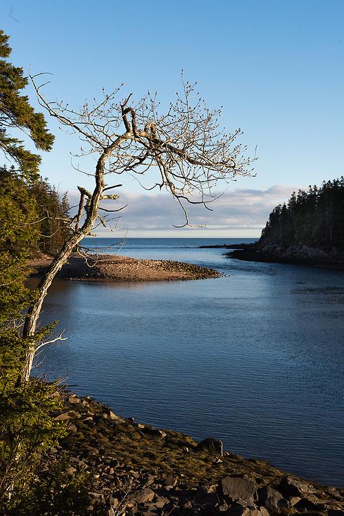 Ship Harbor, Acadia National Park, Maine
