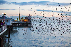 © Licensed to London News Pictures. 26/01/2018. Brighton, UK. Starlings murmuring at Sunset over Brighton Pier. Photo credit: Hugo Michiels/LNP