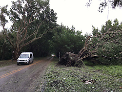 October 7, 2016 - Florida, U.S. - A car passes a downed tree from hurricane Matthew on Bridge Road leading to Jupiter Island in Hobe Sound on October 6, 2016. (Credit Image: © Richard Graulich/The Palm Beach Post via ZUMA Wire)
