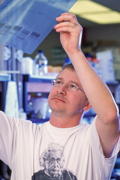 Kansas, USA - Alan Schurle and Devon See with autoradiogram  X rays of wheat DNA