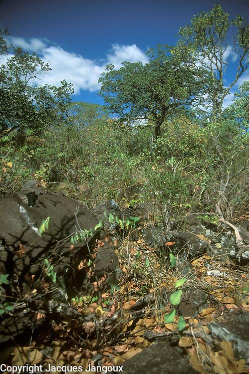 Wooded savanna called cerrado in the Chapada dos Veadeiros in Goias, Brazil.