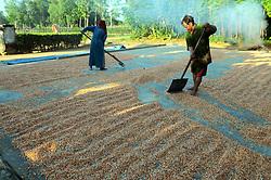 July 28, 2017 - Lampung, Indonesia - Farmers dry their corn on the home page of Lampung, Indonesia, on July, 29, 2017. The corn is used for animal feed. (Credit Image: © Dasril Roszandi/NurPhoto via ZUMA Press)