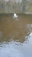 Lozing regenwater op de gracht op de Nieuwestad te Leeuwarden kort na zware regenbui.