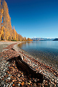 a piece of driftwood lies washed up on the shores of lake wanaka, whilst a handsome line of trees curves around the lakes edge, drawing attention to the treblecone mountain range backdrop, wanaka, otago, new zealand