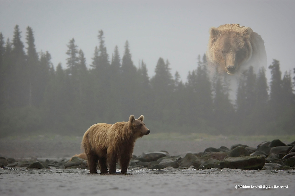 &quot;Totem Bear&quot;<br />