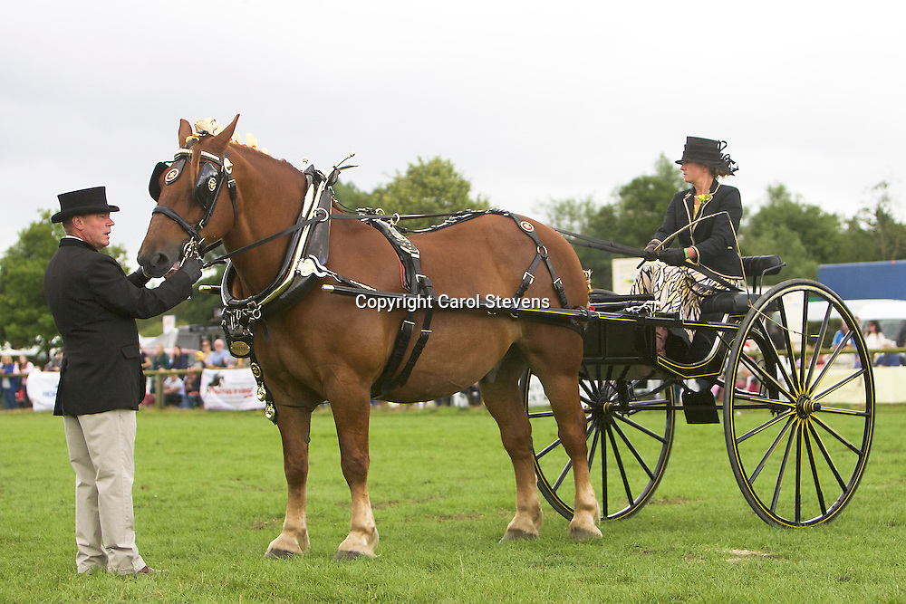 Zoe Meek driving Glen Cass's Suffolk Punch, Kentwell Paige<br />