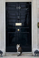 © Licensed to London News Pictures. 21/03/2016. London, UK. Larry the Downing Street cat sitting outside Number 10 in Downing Street, London on Monday, 21 March 2016. Photo credit: Tolga Akmen/LNP