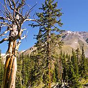 On the Mt. Yale Trail, Sawatch Range, Colorado