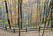 "The last orange and yellow leaves drop in early November at the unique Natural Tunnel State Park, near Duffield, Virginia, where both a train and a river share the same natural limestone cave, measuring 850 feet (255 meters) long. The railroad has used this tunnel since 1890. Natural Tunnel began forming during the early Pleistocene Epoch and was fully formed by about one million years ago. The Glenita fault line running through the tunnel, combined with moving water and naturally forming carbonic acid may have formed Natural Tunnel through the surrounding limestone and dolomitic bedrock. After the tunnel formed and the regional water table lowered, Stock Creek diverted underground, then later took the path of least resistance through the Natural Tunnel, through Purchase Ridge, flowing south to join the Clinch River. Daniel Boone is believed to have been the first white man to see it. William Jennings Bryan (1860-1925) dubbed it the ""Eighth Wonder of the World""; and the tunnel has been a tourist attraction for more than a century. Natural Tunnel State Park was created in 1967, and opened to the public in 1971. For a time, a passenger train line ran through Natural Tunnel, and today, the railroad still carries coal through it to the southeast USA. Published in ""Light Travel: Photography on the Go"" book by Tom Dempsey 2009, 2010."