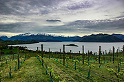 Rippon, Wanaka area, Central Otago