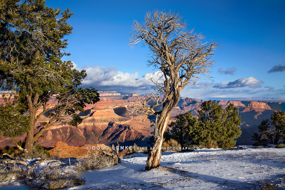 Fresh Winter Snow At Grand Canyon National Park, East Rim, Arizona, USA