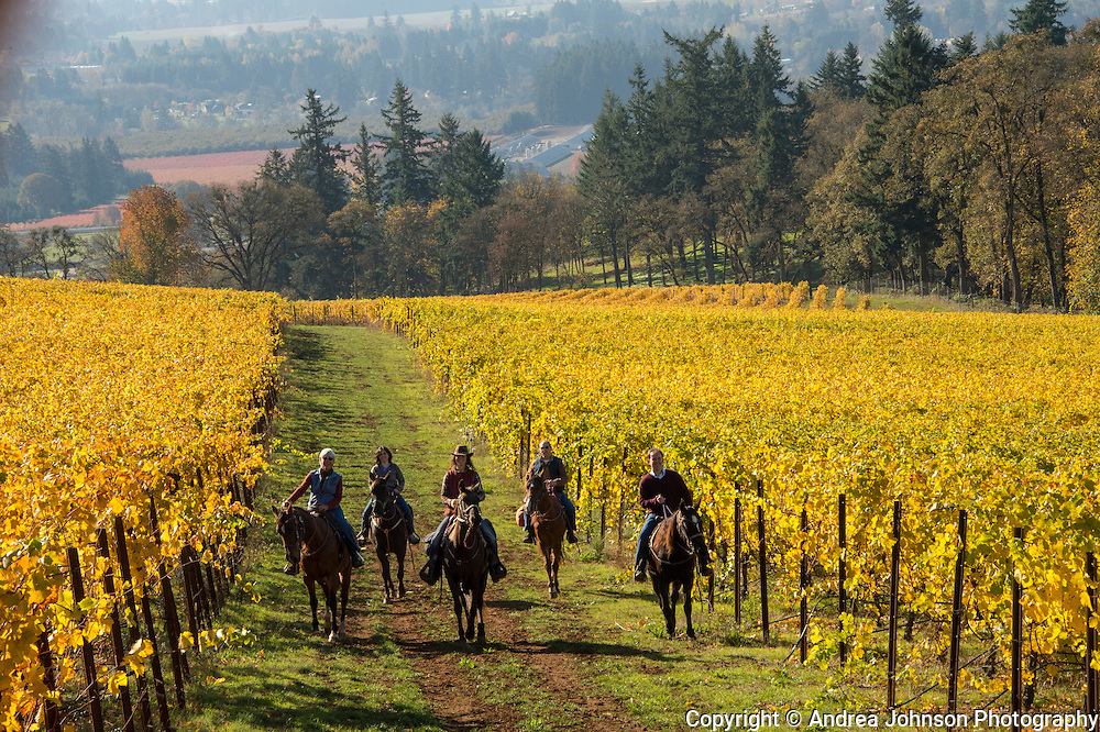 Equestrian Horseback riding tours through Willamette Valley at Winter's Hill estate vineyard, Dundee Hills, Oregon