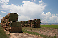 Irrigated fields near Monte Vista, Colorado