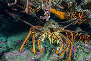 Tawharanui Marine Reserve