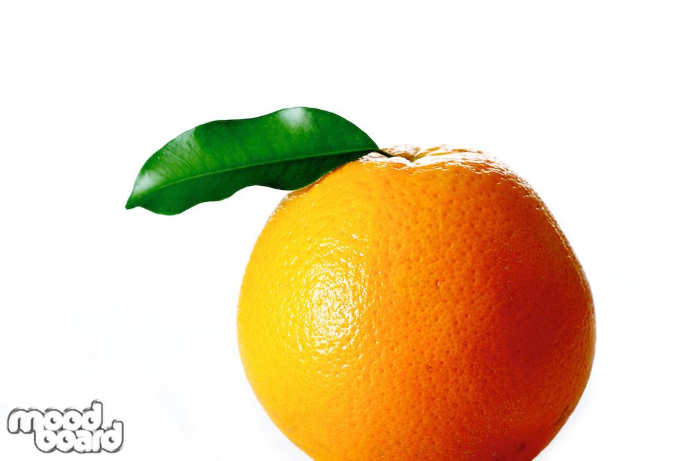 Studio shot of orange on white background