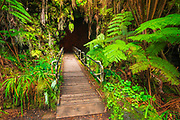 The entrance to the Thurston Lava Tube, Hawaii Volcanoes National Park, Hawaii USA