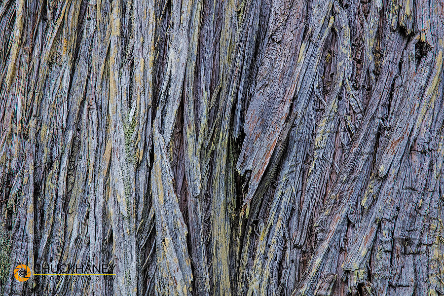 Texture in cedar bark in Ganges, British Columbia, Canada