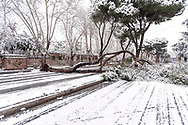 ROME, ITALY - FEBRUARY 26: Trees fallen by the snow in Tiburtina street in the San Lorenzo district, after the snowfall in the night connected to the arrival of Burian that have whitewashed the capital, on February 26, 2018 in Rome, Italy.