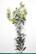 cactus plant twig