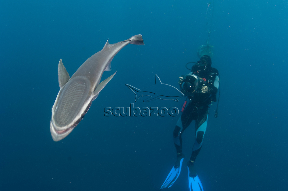 Photographer and sharksucker, Aliwal Shoal, South of Durban, South Africa.