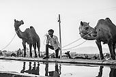 India: Jaisalmer to Darjeeling B&W
