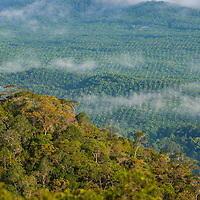 Oil palm plantation, from the summit of Gunung Silam, Sabah, Malaysia, Borneo, South East Asia.