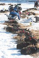 Photographs of John Baker's 2011 Iditarod run. Nikolai checkpoint. Stephen Nowers/Alaska Dispatch