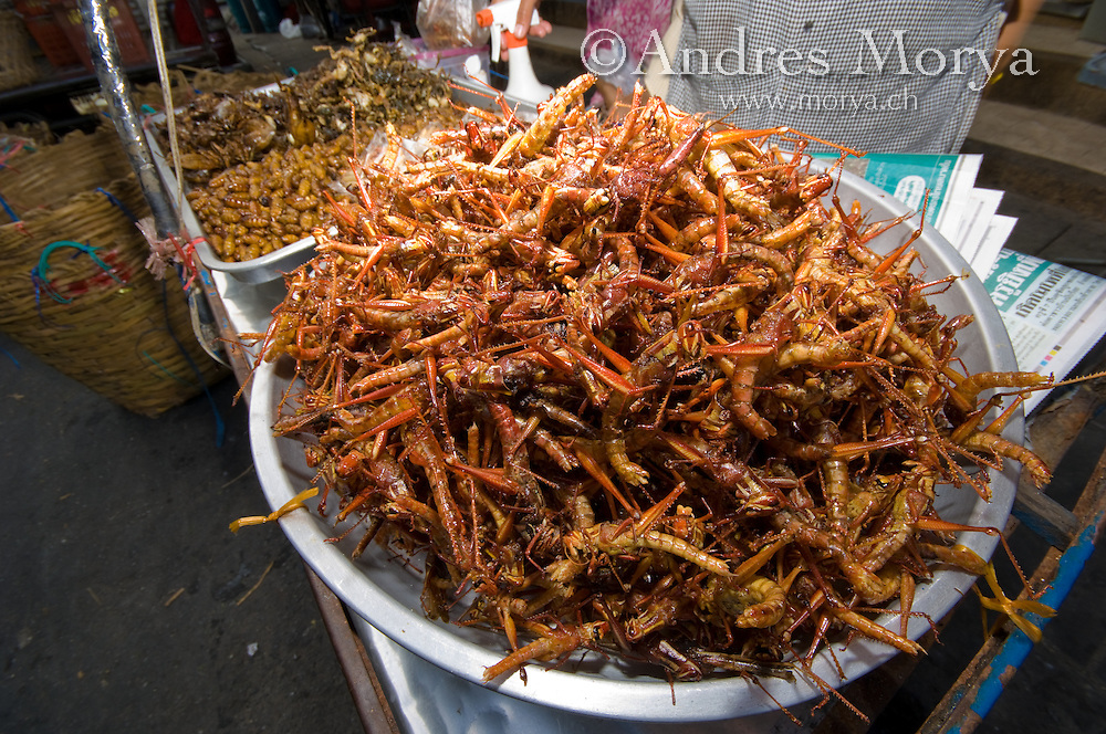 Thailand, Asia Fried Insects in a Market, Bangkok, Thailand Image by Andres Morya