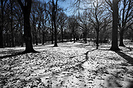Snow in the Pinetum of Central Park.