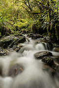 A small stream in the forest at Mount Aspiring National Park, along the Routeburn Track, New Zealand.