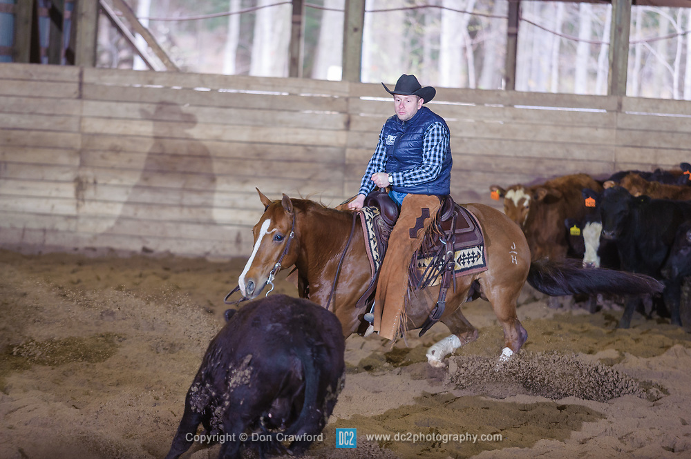 April 30 2017 - Minshall Farm Cutting 2, held at Minshall Farms, Hillsburgh Ontario. The event was put on by the Ontario Cutting Horse Association. Riding in the Non-Pro Class is Eric Bouchard on The Reyl Slim Shady owned by the rider.