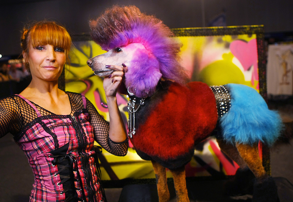 Creative Grooming competition at the Pet Expo, at the Exhibition &amp; Convention Centre. Punk: Bridget the standard poodle. Creative stylist: Prue Garner, from Sydney   - Pic By Craig Sillitoe 09/09/2010  Pic By Craig Sillitoe CSZ / The Sunday Age melbourne photographers, commercial photographers, industrial photographers, corporate photographer, architectural photographers, This photograph can be used for non commercial uses with attribution. Credit: Craig Sillitoe Photography / http://www.csillitoe.com<br />