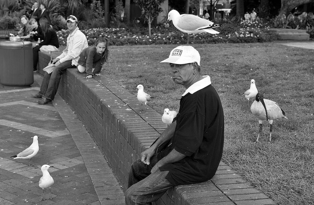 Seagull on man's hat - Circular Quay, Sydney NSW Australia 06/04/2011