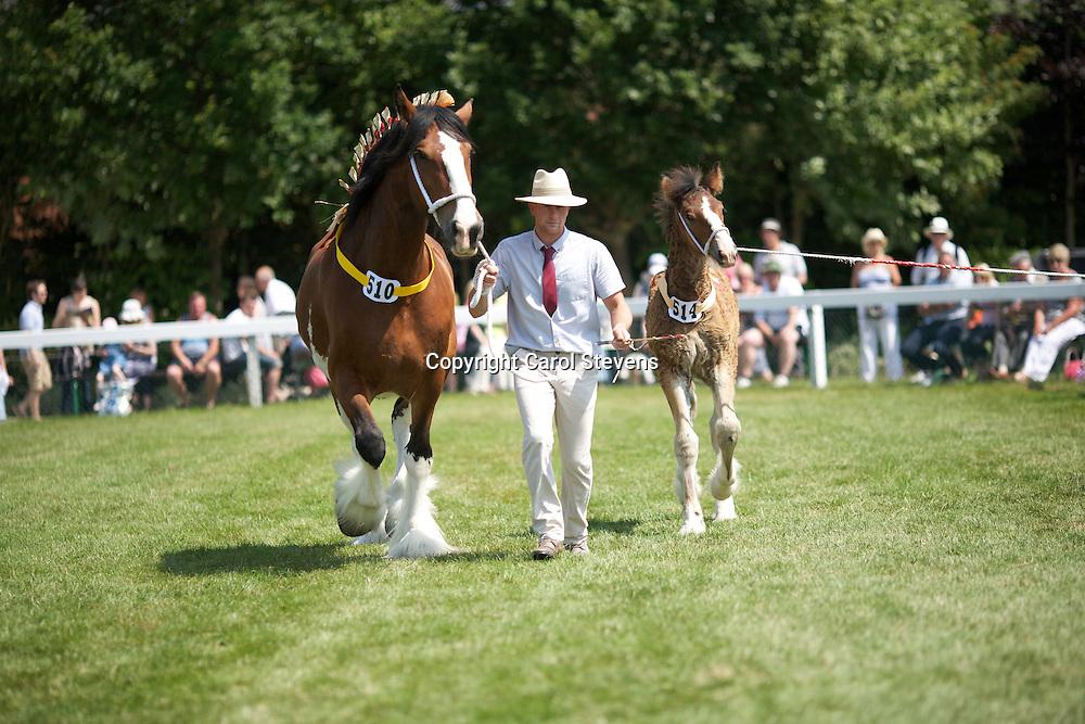 Richard Bedford's 7 year old bay  mare  Skelton Phoebe with bay colt foal by Helms Kingdom Gabriel<br /> s  Harwoods Commander<br /> <br /> 2nd  Brood Mare