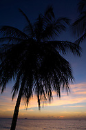 A palm in tree in silhouette at sunset;  Alleynes Bay on the West coast of Barbados