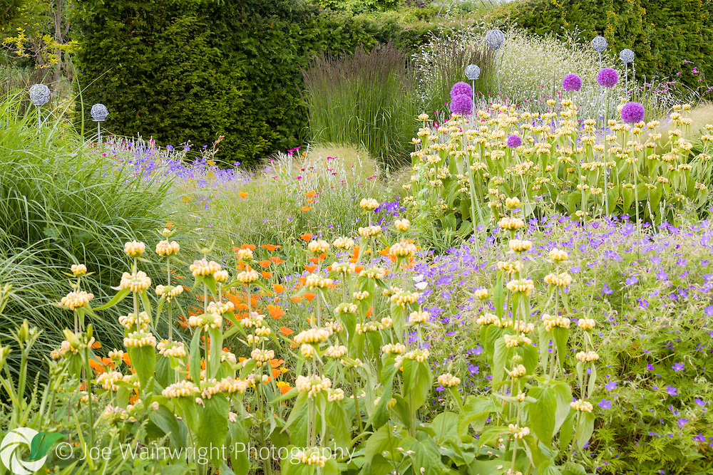 Alliums, Geraniums, Phlomis and Lychnis in a border at Bluebell Cottage Gardens, Cheshire - photographed in June