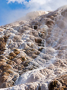 Palette Spring, Mammoth Hot Springs, Yellowstone National Park, Wyoming, USA. Over thousands of years, Mammoth Hot Springs have built white travertine terraces. Algae and bacteria tint the travertine shades of brown, orange, red, and green. Terrace Mountain (including Minerva Terrace) at Mammoth Hot Springs is the largest known carbonate-depositing spring in the world. The Mammoth Hotel and Fort Yellowstone are built upon the old Hotel Terrace formation. Hot water from Norris Geyser Basin within the Yellowstone Caldera travels underground via a fault line through limestone and deposits calcium carbonate at Mammoth Hot Springs, outside of the active supervolcano's caldera.
