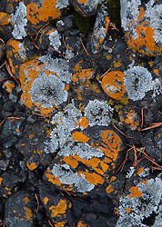 Rock Face and Lichens, Gossip Island, San Juan Islands, Washington, US