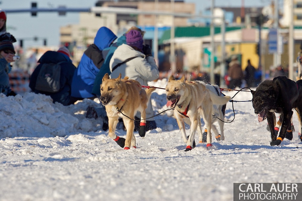 March 7th, 2009:  Anchorage, Alaska - The lead dogs of team Ramey Smyth of Willow, Alaska at the start of the 2009 Iditarod Sled Dog Race.