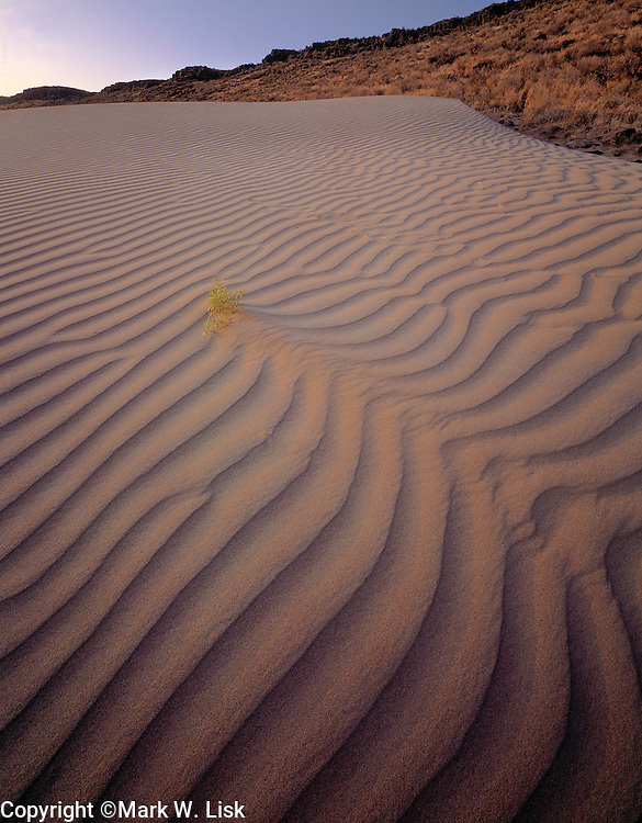 Sand begins to infringe on a hill side in the Bruneau Sand Dunes State Park, Idaho.