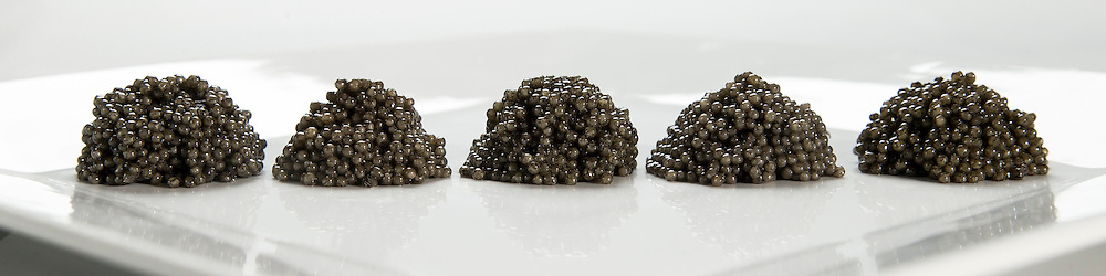 4/21/15 10:07:09 AM -- Technical comparison between samples 14, 11, 6, 4 and 2 (left to right). Paddlefish Caviar for the Oklahoma Department of Wildlife Conservation. <br /> <br /> Photo by Shane Bevel