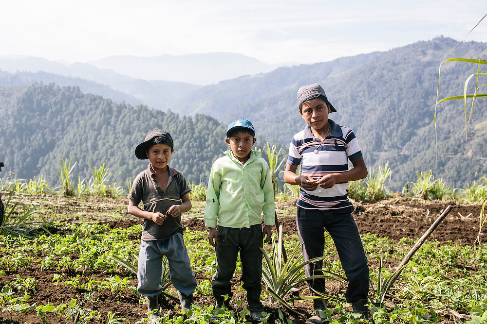 Children help their families by tilling the soil at Parque Agro-Ecological Ixil, in Nebaj, Guatemala. The children have been taught by their parents how to work the land and because of the extra income from the diversity of crops, they can attend school in the community during the afternoon. The land, about 640 acres, was purchased by 75 farmers and in partnership with the Nature Conservancy and USAID who have taught them best agricultural practices, like how to diversify crops, and best practices in manufacturing, such as to keep crops from human contamination. After five years, the farmers have paid off 85 percent of the loan to purchase the land, and the farmers have been able to put their children through school and receive medical care as a result of the new income.