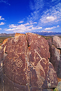 Mogollon petroglyphs under Sierra Blanca Peak, Three Rivers Petroglyph Site, New Mexico