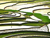 Terrace Rice Fields