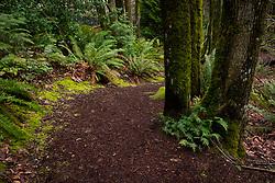 United States, Washington, Bellevue. Path through woods.