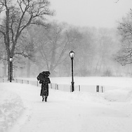 Central Park during the blizzard of 2016, New York City
